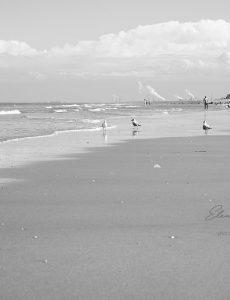 Das Meer und andere